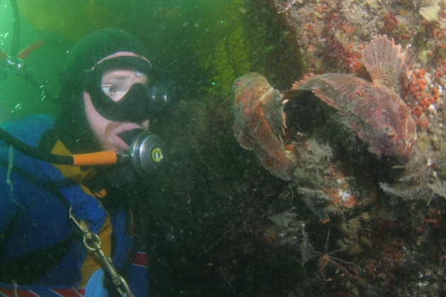 BUFFALO SCULPINS IN WRECK