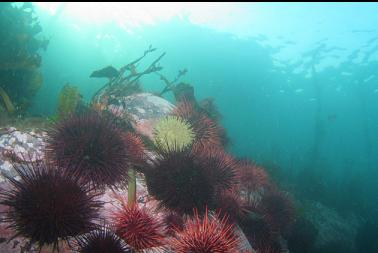 urchins and anemones under boat