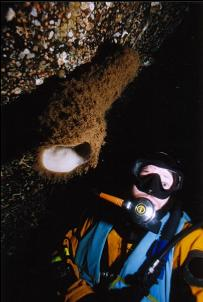 DIVER AND BOOT SPONGE