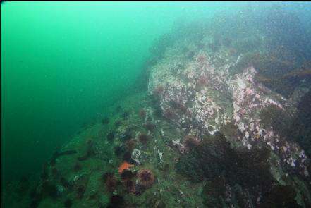 rock slope and urchins