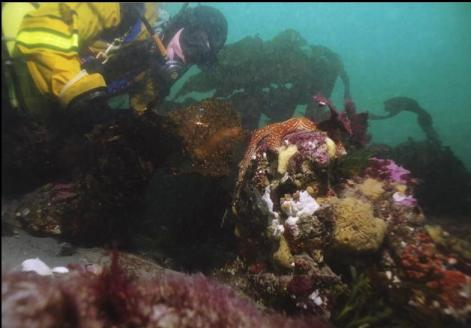 TUNICATES AND SPONGES