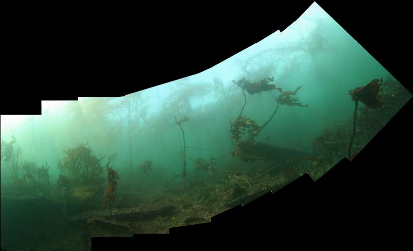wreckage and kelp panorama