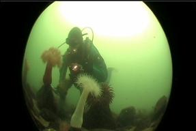 ME AND ANEMONES