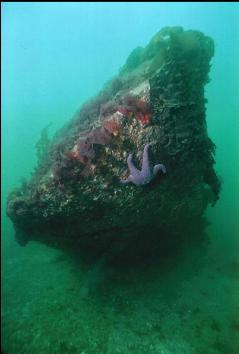 BOW OF WRECK