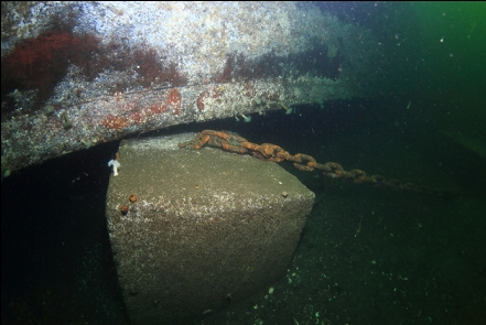 anchor block and chain under a dock