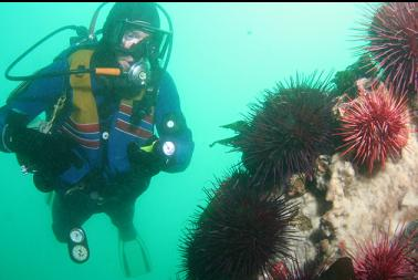 urchins and sponge