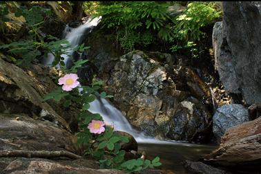 wild roses and waterfall