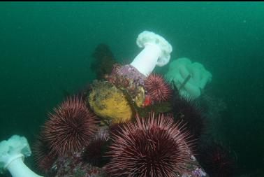 sponge, urchins and anemones