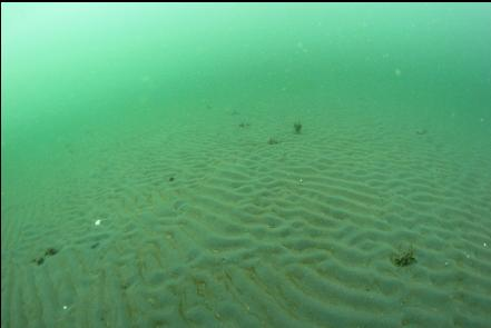 ripples in the shallow sand