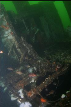 COPPER ROCKFISH AROUND REMAINS OF CABIN