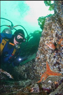 LEATHER STAR AND TUNICATE
