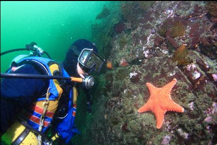 some kind of seastar that I only see in this area
