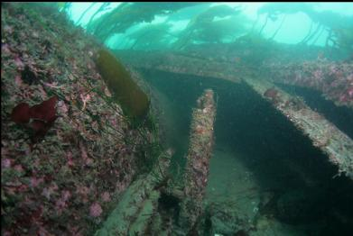 stern tube on left and kelp-covered wreckage on top