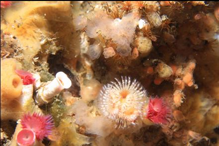 tube worms, tunicates and sponge