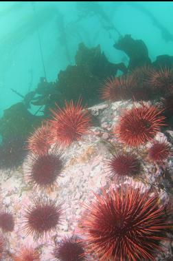 urchins at top of 2nd wall