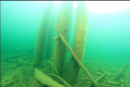 pilings and chain